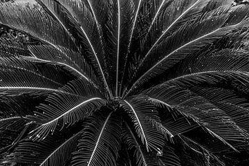 Palme von Fotoverliebt - Julia Schiffers