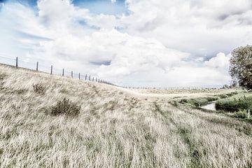 Wuivend gras van Willy Sybesma