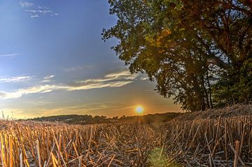Sonnenuntergang im Getreidefeld von