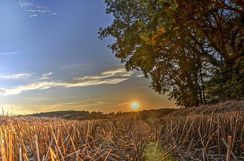 Zonsondergang boven het korenveld van