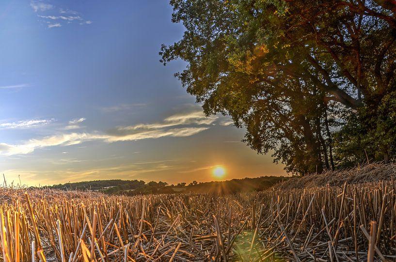 Zonsondergang boven het korenveld van Frans Blok