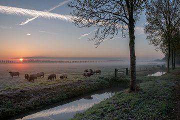 Schapen zonsopkomst bij Ommeren van Moetwil en van Dijk - Fotografie