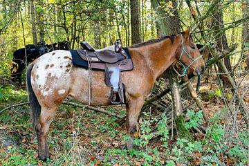 Rustende paarden van