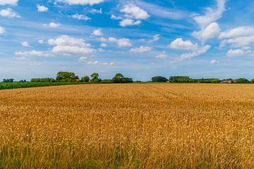 Getreidefeld im Vollsommer von Bart Poelaert