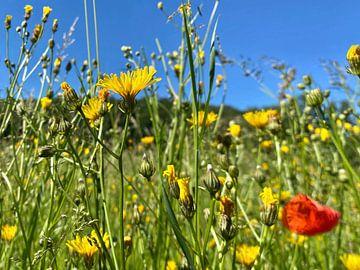 Blumenwiese von Markus Jerko