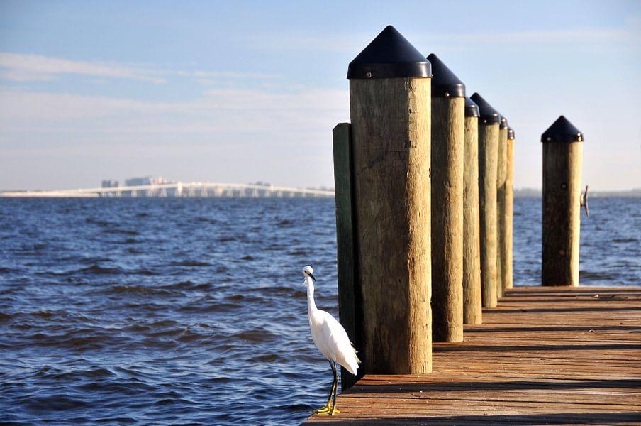 Steiger in de Golf van Paul van Baardwijk