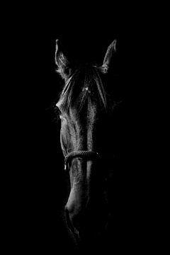Pferdekopf, B+W von Daniel Damnitz