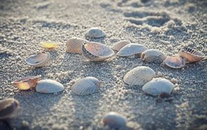 seashells van