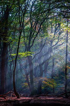 Herbst in den Speulderbos von Kim Claessen