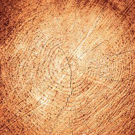 jaarringen, boom dwarsdoorsnede van Wim Demortier
