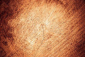 jaarringen, boom dwarsdoorsnede von Wim Demortier