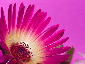 Fleur IX - Bloemen van