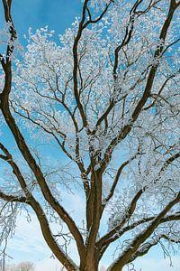 Bevroren besneeuwde winterbomen met een mooie blauwe lucht in de achtergrond
