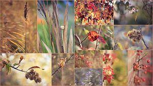 """collage """" herfst"""" van Els Fonteine"""