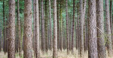 Bos panorama van Mark Bolijn