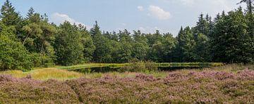 Bloeiende hei voor bos ven en bosrand von Frank Hoekzema