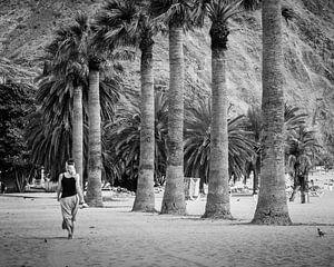 Langs de palmen