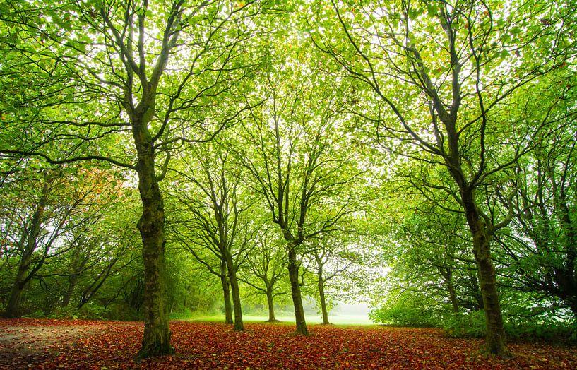 Herfst van Gert Brink