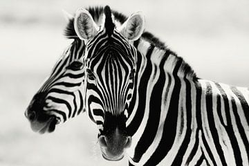 Black or white, Zebra's in Namibia sur