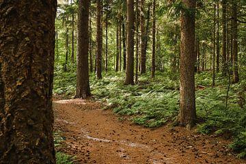 Het bospad van Nienke te Vruchte