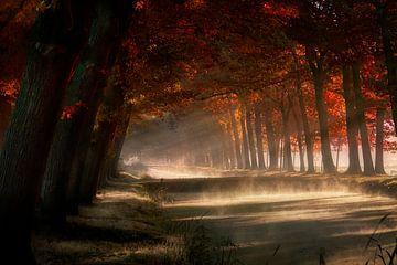 Misty Land sur Kees van Dongen