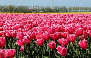 Tulpen in de Noordoostpolder van Arline Photography