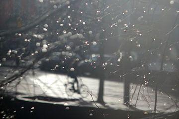 Winterradfahrer von Marianna Pobedimova
