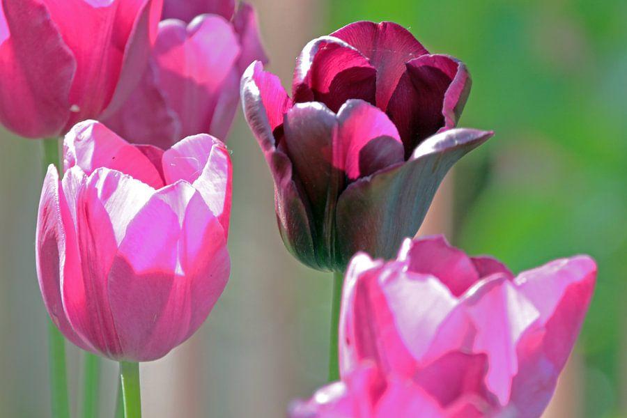 Quatre tulipes van Gerda H.