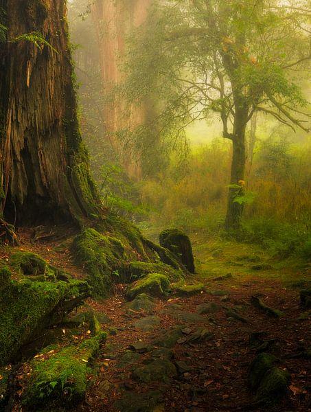 De mooie bossen van Alishan nationaal park in Taiwan. van Jos Pannekoek
