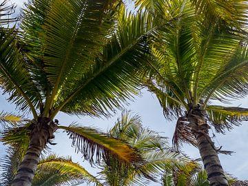 Palmbomen van de onderkant van Moniek van Rijbroek