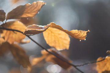 gouden bladeren van Tania Perneel