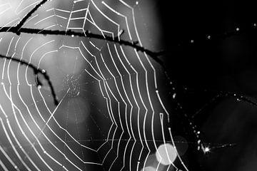 Das Spinnennetz im Gegenlicht. Wo ist die Spinne? von Studio de Waay