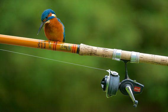 IJsvogel - De visser van IJsvogels.nl - Corné van Oosterhout