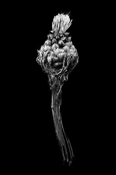 Blume von Willie Jan Bons