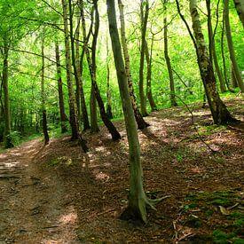 Dans la forêt légère sur Ostsee Bilder