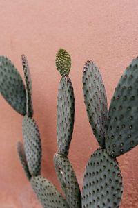 Kaktus auf rosa Wand im Hortus Botanicus Amsterdam von Jolande Alicia