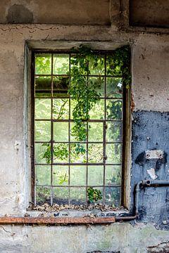 das alte Fenster von Nadine Rall