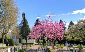 Koepelkerk Arkel in het voorjaar