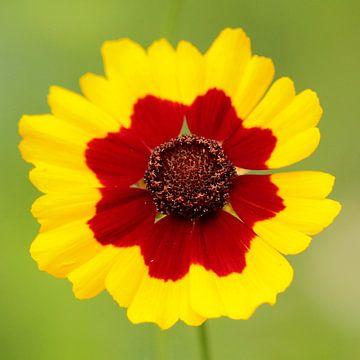Zomaar een bloem..... von Sander Maas