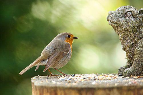 Robin op de voedertafel Erithacus rubecula