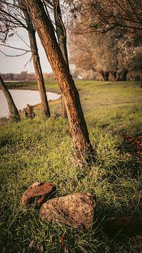 bomen van AciPhotography