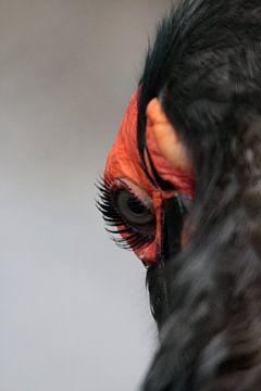 Glurende vogel van Saskia Hoks