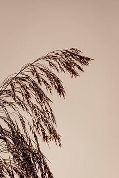Schilf während des goldenen Sonnenaufgangs im Herbst von Oog in Oog Fotografie