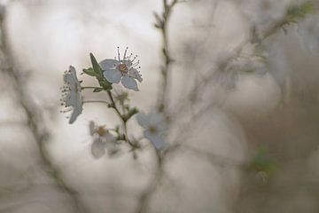 Frühlingsträume von Birgitte Bergman