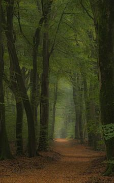 Bospad tussen zomer en herfst van Michel Knikker