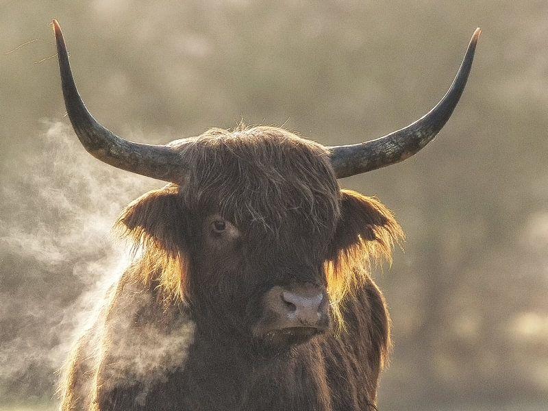 Smokey van Bert van Beek