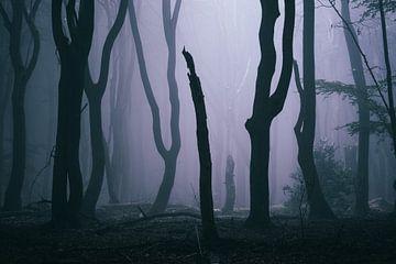 Voodoo bossen van Tvurk Photography