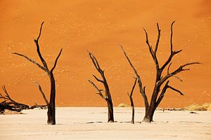Deadvlei mit toten Bäumen, Wüstenlandschaft der Namib van