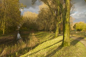 Herfst bomenrijen Biesbosch von Ronald Dijksma