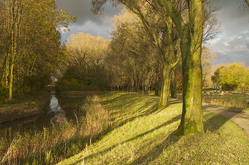 Herfst bomenrijen Biesbosch